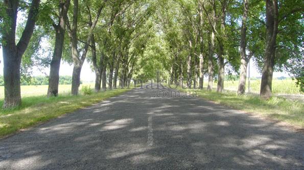 Дорога до Трипільського кола
